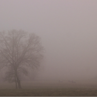 Seeing through the Fog of Useless Emotions
