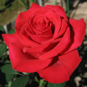 stop and smell the roses-Philadelphia Life Coach Leslie J Saul