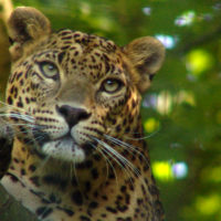 Do Leopards Change Their Spots?