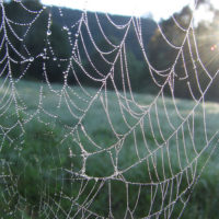 How to Handle Liars and the Tangled Webs they Weave